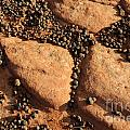 Sandstone And Pebbles by Gary Whitton