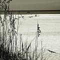Sanibel Island Florida by Susanne Van Hulst