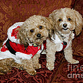 Santa Puppies by Jim And Emily Bush