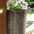Sap Bucket Planter by Kerri Mortenson