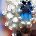 Saphire Sparkle by Debbie Portwood