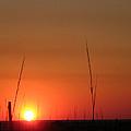 Sarasota Sunset by Mickey Krause