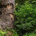 Sasquatch Rubbing Tree by Greg Nyquist