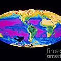 Satellite Image Of The Earths Biosphere by Dr. Gene Feldman, NASA Goddard Space Flight Center