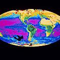Satellite Image Of The Earth's Biosphere by Dr Gene Feldman, Nasa Gsfc