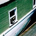 Sausalito Boat Cat by Don Struke
