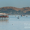Sausalito Harbour by Carol Ailles