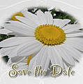 Save The Date Greeting Card - White Daisy Wildflower by Mother Nature