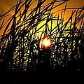 Sawgrass Sunrise by Kari Tedrick