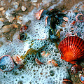 Scallop And Seaweed 11c by Gerry Gantt
