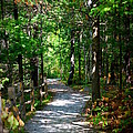 Scenic Pathway by Jennifer  King