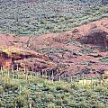 Scenic Red Rocks by Kim Galluzzo Wozniak