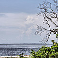 Scenic View At Emerson Point by Rosalie Scanlon