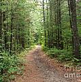 Scenic Walk by Grace Grogan