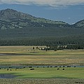 Scenic Wyoming Landscape With Grazing by Norbert Rosing