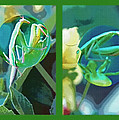 Science Class Diptych - Praying Mantis by Steve Ohlsen