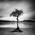 Scotland Milarrochy Tree by Nina Papiorek