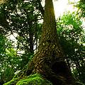 Screaming Tree by Kamil Swiatek