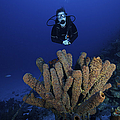 Scuba Diver Swims Underwater Amongst by Terry Moore