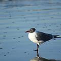 Sea Bird Reflection by Pat Exum