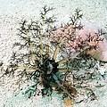 Sea Cucumber And Starfish by Georgette Douwma