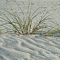 Sea Grass by Barbara Stickney