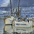 Sea Hawk Under Cover by Deborah Benoit