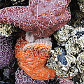 Sea Life by Pam Humphreys