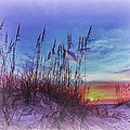 Sea Oats 5 by Skip Nall