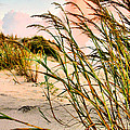 Sea Oats And Dunes by Kristin Elmquist