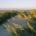 Sea Oats, Dunes, And Beach At Oregon by Skip Brown