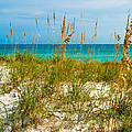Sea Oats Gulf - Destin by Ernest Hamilton