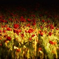 Sea Of Red by Mimulux patricia No