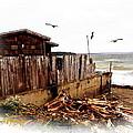 Sea Shanty by Sadie Reneau