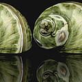 Sea Shells Photography Still Life by Ann Powell