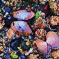 Sea Shells Sea Life by RJ Aguilar