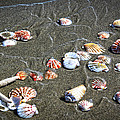 Sea Shells by Steve McKinzie