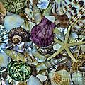 Sea Treasure - Square Format by Paul Ward