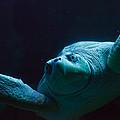 Sea Turtle In Deep Ocean by Jiayin Ma