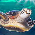 Sea Turtle by Mike Royal