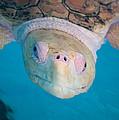 Sea Turtle by Rosie Herbert