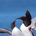 Seabird Love by Bruce J Robinson