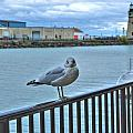 Seagull At Lighthouse by Michael Frank Jr