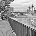 Seagull At The Naval And Military Park by Michael Frank Jr