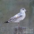 Seagull by Betty LaRue