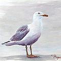 Seagull by Chriss Pagani