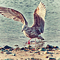 Seagull Flaps by Karol Livote