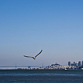 Seagull Flying Over San Francisco Bay by David Buffington