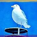 Seagull Fun Colors by Debra  Miller