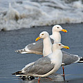Seagull Fusion by Debra  Miller